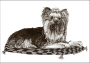Cats Prints Drawings Prints - Yorkshire Terrier on checkered pillow Print by Jack Pumphrey