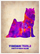 Terrier Digital Art Framed Prints - Yorkshire Terrier Poster Framed Print by Irina  March