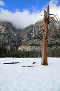 Yosemite In The Dead Of Winter Print by Patricia Sanders