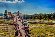 Yosemite Touloumne Meadows Print by Nadine and Bob Johnston