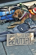 Homeless Pets Prints - You Are Beautiful Print by William Rockwell