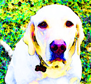 Pet Portraits Digital Art Posters - You Are My World - Yellow Lab Art Poster by Sharon Cummings