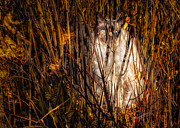 Autumn Prints - You can not see me Print by Bob Orsillo