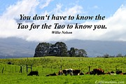 Makawao Photos - You do not have to know the Tao by Pharaoh Martin