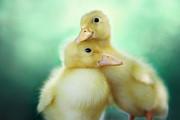 Ducklings Prints - You Make Me Smile Print by Amy Tyler