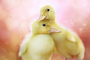 Baby Animals Photos - You Make Me Smile II by Amy Tyler