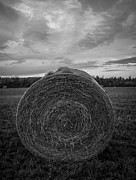 Tasteful Art Photo Prints - You Reap What You Sow Print by Blue Muse Fine Art
