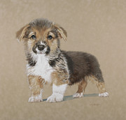 Corgi Drawings - You Talkin Ta Me by Helen Bailey