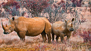 Rhinoceros Framed Prints - You watch my Back and I will Do the Same for You Framed Print by Douglas Barnard