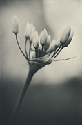 Black And White Florals Framed Prints - You Will Always Be Framed Print by Laurie Search