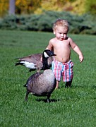 Pond In Park Framed Prints - Young Boy with the geese. Framed Print by Don Mann