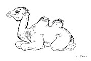 Camel Drawings - Young camel - Camelidae by Kurt Tessmann