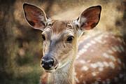Barbara Orenya - Young Deer