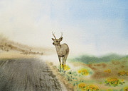 Grey Clouds Framed Prints - Young Deer On The Foggy Road Framed Print by Irina Sztukowski