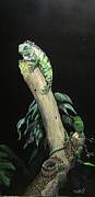 Greg Neubert - Young iguana and tody