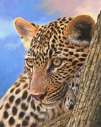 David Stribbling - Young Leopard