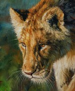 Lion Painting Posters - Young Lion Poster by David Stribbling