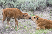 Bison Originals - Young Love by Deby Dixon