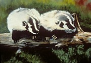 Badgers Prints - Young Montana Badgers Print by Chris J Worden Gregg