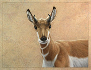 Featured Drawings Posters - Young Pronghorn Poster by James W Johnson