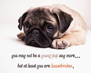Message Photo Posters - Young Pup Poster by Edward Fielding