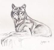 Young Wolf Print by John Keaton