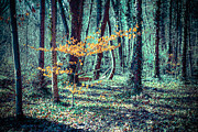 Youngster Print by Hannes Cmarits