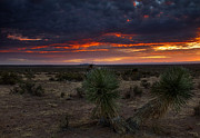 Barren Framed Prints - Yucca Sunset Framed Print by Mike  Dawson