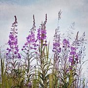 Grasses Prints - Yukon State Flower Print by Priska Wettstein