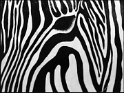 Jane Biven Acrylic Prints - Zebra 13 Acrylic Print by Jane Biven