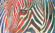 Zebra Mixed Media - Zebra art - 2 stylised drawing art poster by Kim Wang
