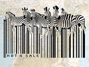 Sassan Filsoof - Zebra barcode