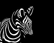 Gregory Smith - Zebra Black and White