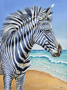 Zebra Paintings - Zebra by the sea by Tish Wynne