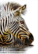 Bush Wildlife Framed Prints - Zebra Crossing Framed Print by Michael Durst