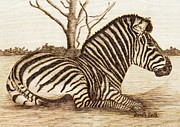 Hatch Pyrography Posters - Zebra Poster by Danette Smith