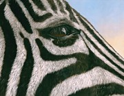 David Stribbling - Zebra.