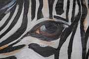Marenda Smith - Zebra Eye