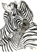 Catherine Basten - Zebra Foal