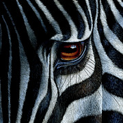 Wildlife Framed Prints - Zebra Framed Print by Jurek Zamoyski