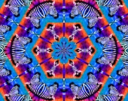 Repeat Photos - Zebra Kaleidoscope by Elizabeth Budd