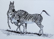 Photo Drawings - Zebra Play by Cheryl Poland