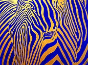 Zebra Paintings - Zebra by Svilen And Lisa