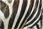 Water Color Digital Art Metal Prints - Zebra Texture Metal Print by Ayse T Werner