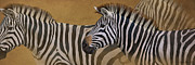 Zebra Digital Art - Zebra Trio by Aaron Blaise