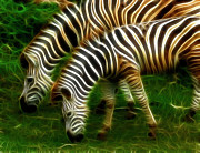 Fractals Photos - Zebras by Bob Christopher