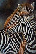 Zebra Metal Prints - Zebras Metal Print by David Stribbling
