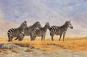 Zebra Metal Prints - Zebras Ngorongoro Crater Metal Print by David Stribbling