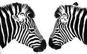 Sheila Smart - Zebras
