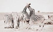 Ramona Johnston - Zebras Unleashed